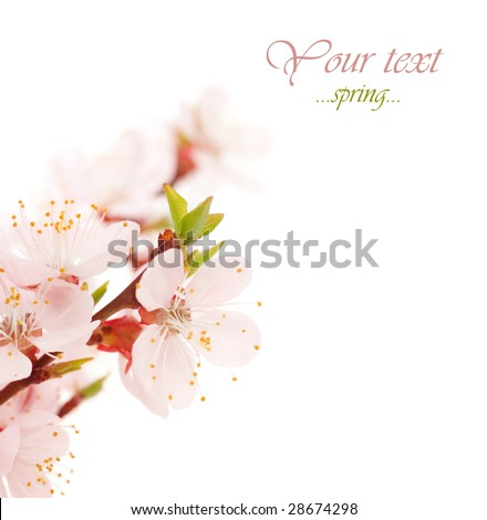 Beautiful Blossoms Border - stock photo