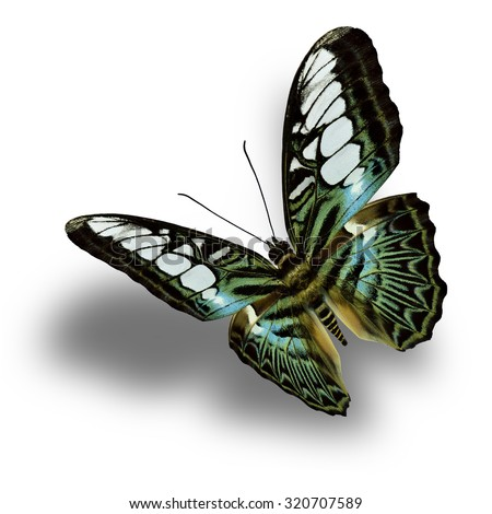 Beautiful blue and green butterfly,the Clipper Butterfly upper wing profile flying up and present in nature color. - stock photo