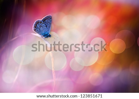 Beautiful blue butterfly dream - stock photo