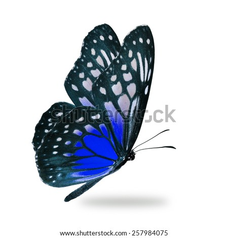 Beautiful blue butterfly flying isolated on white background - stock photo