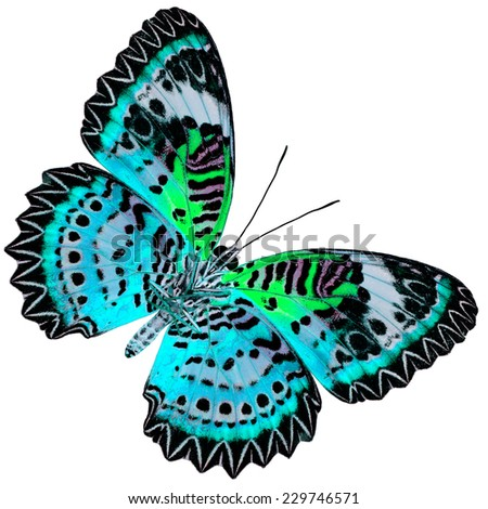 Beautiful Blue Butterfly with green wings (Leopard Lacewing) in fancy color profile isolated on white background - stock photo