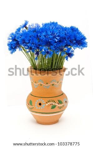 Beautiful blue cornflower - stock photo
