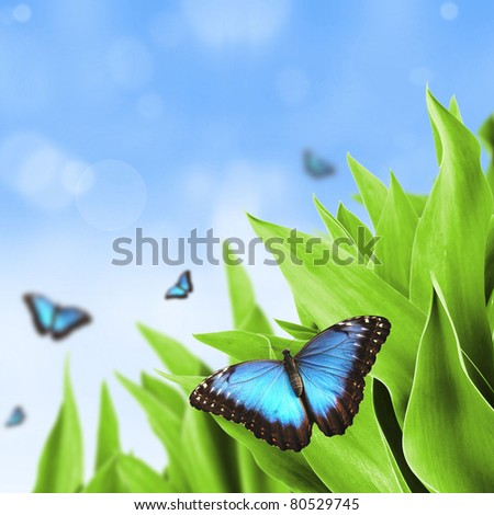 Beautiful blue exotic butterfly on green leaves - stock photo