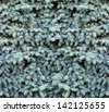 beautiful  blue fir-tree as abstract christmas background - stock photo