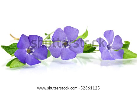 Beautiful blue flower isolated on white - stock photo