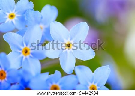 beautiful blue flowers  against white background. Super macro - stock photo