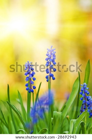 Beautiful blue flowers on a meadow (shallow DoF) - stock photo