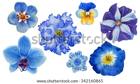 Beautiful Blue flowers. Summer isolated set with flowers. Watercolor Set with blue flowers.