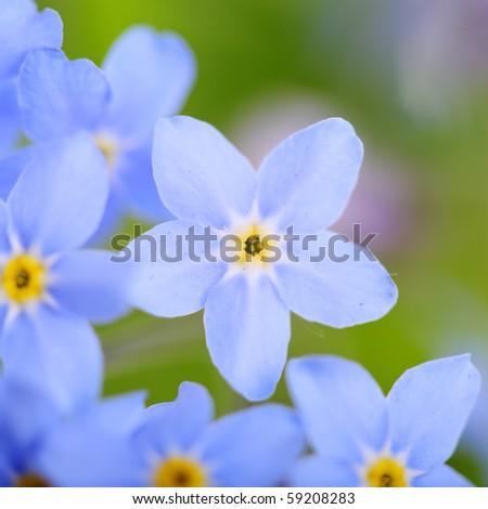 beautiful blue flowers, super macro - stock photo
