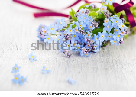 beautiful blue forget-me-not on white - stock photo