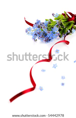 beautiful blue forget-me-not on white isolated background - stock photo
