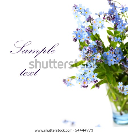 beautiful blue forget-me-nots against white isolated background. (With sample text) - stock photo