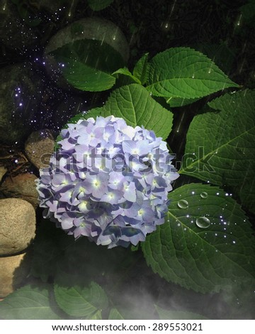 Beautiful blue hydrangea with green foliage and rocks and hand painted sparkles and raindrops with a bit of mist to add some mystery.  Perfect for your fairy renders or photo-manipulations.  - stock photo
