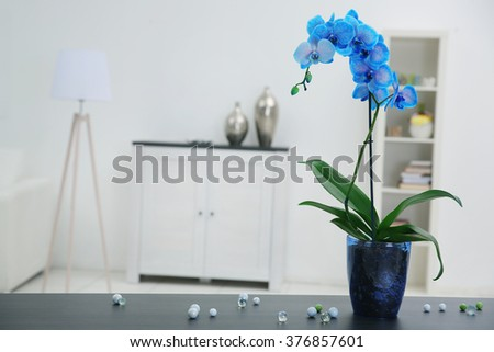 Beautiful blue orchid flower on table in the white room - stock photo