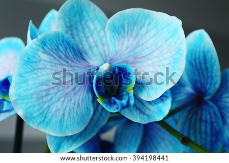 Beautiful blue orchid flowers, close up - stock photo