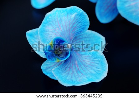 Beautiful blue orchid flowers on black background, close up - stock photo