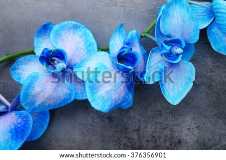 Beautiful blue orchid flowers on grey background, close up - stock photo