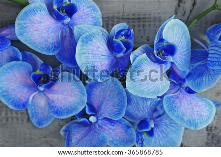 Beautiful blue orchid flowers on wooden background, close up - stock photo