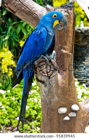 beautiful blue parrot on a tree - stock photo