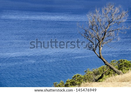 Beautiful blue sea and a tree in Sardinia, Italy