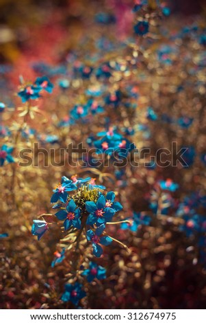 beautiful blue small wild flowers in forest on dark natural brown background
