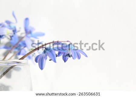 Beautiful blue spring flowers on the white background - stock photo