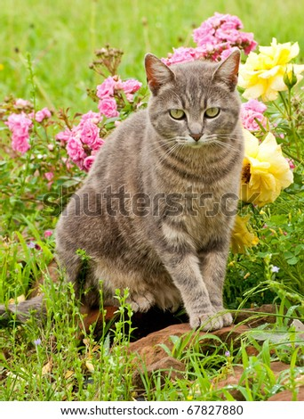 Beautiful blue tabby kitty cat against colorful flower background after rain - stock photo