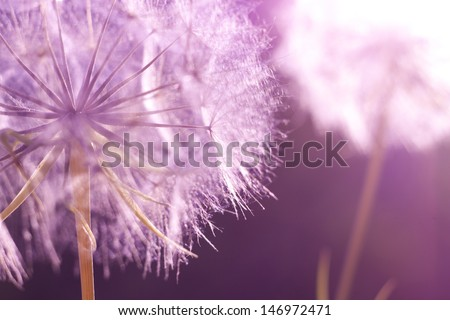 Beautiful blue wild flowers. Blurred background - stock photo