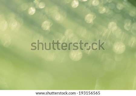 Beautiful bokeh  background - Water drops on the green banana leaf.