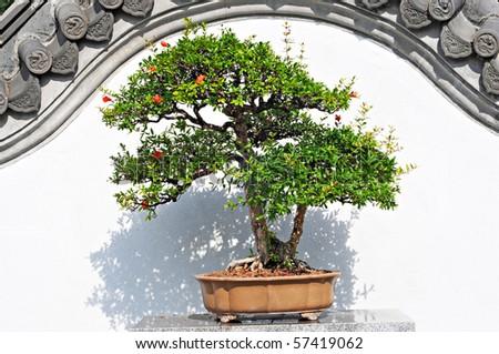 beautiful bonsai in botanical garden - stock photo