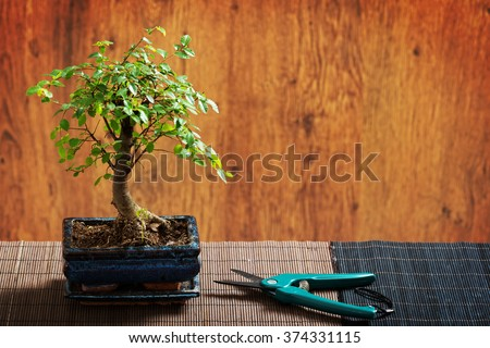 Beautiful bonsai tree and scissors on wooden background - stock photo