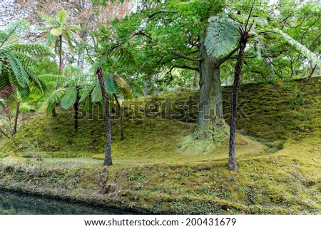 Beautiful botanic garden of Furnas Sao Miguel, The Azores Islands, Portugal