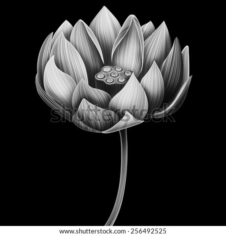 Beautiful botanical lotus flower card. Isolated floral background. Stylish and vintage water lilly. - stock photo