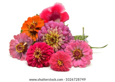 Beautiful bouquet flowers zinnia and gloxinia isolated on white background. Flat lay, top view