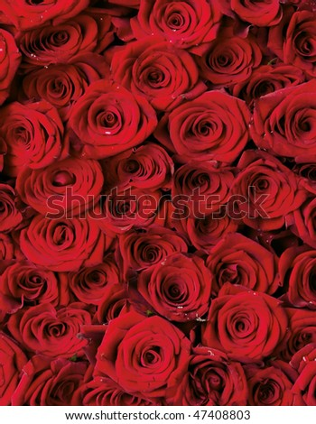 beautiful bouquet from the roses of pink and red color - stock photo