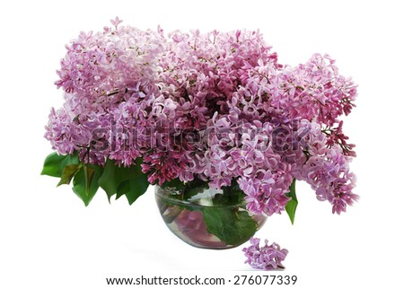 Beautiful bouquet of a gentle spring lilac flowers isolated on a pink background - stock photo