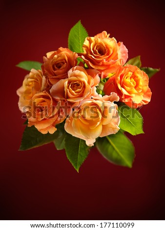 Beautiful bouquet of blooming orange roses on dark red background.
