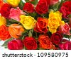 beautiful bouquet of colorful fresh assorted roses - stock photo