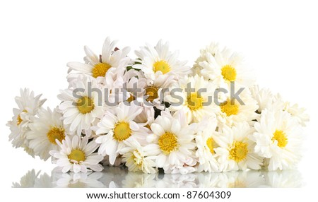 beautiful bouquet of daisies isolated on white
