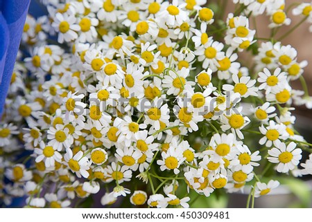 Beautiful bouquet of daisies. Selective soft focus
