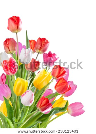 Beautiful bouquet of flowers tulip isolated on white background - stock photo