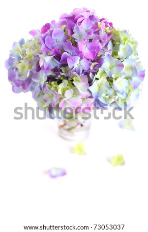 Beautiful bouquet of hydrangeas with glass vase on white isolated background - stock photo
