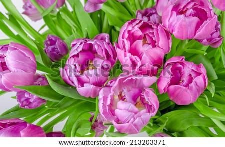Beautiful bouquet of pink tulips in flowerpot - stock photo