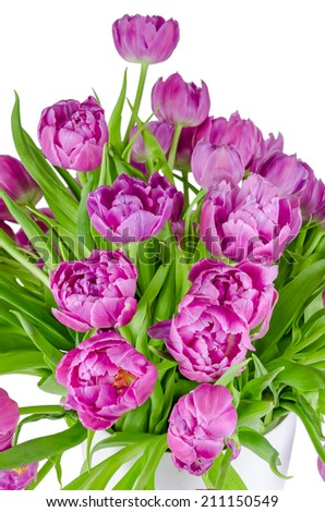 Beautiful bouquet of pink tulips in flowerpot isolated on white background - stock photo