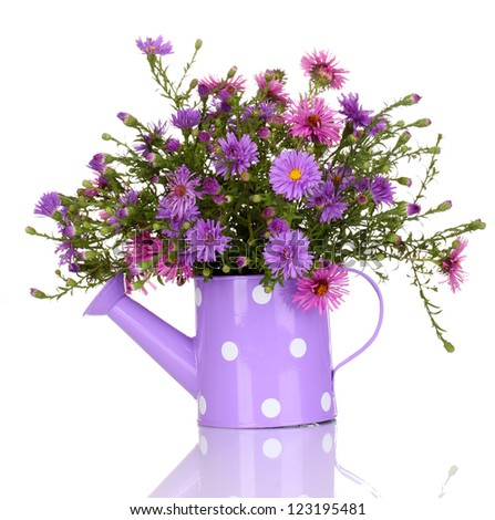 beautiful bouquet of purple flowers in watering can isolated on white - stock photo