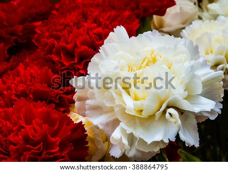 Beautiful bouquet of red and cream carnations