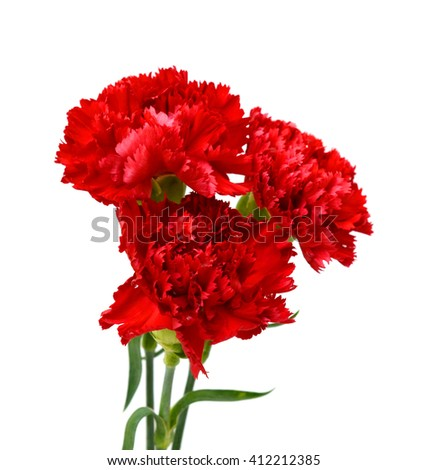 Beautiful bouquet of red carnation flowers isolated on white background