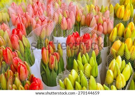 beautiful bouquet of tulips - stock photo