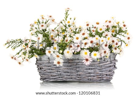 beautiful bouquet of white flowers in basket isolated on white - stock photo