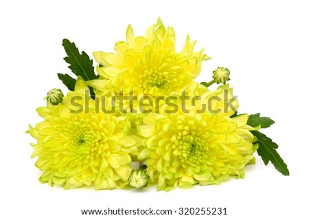 beautiful bouquet of yellow daisies isolated on white background - stock photo